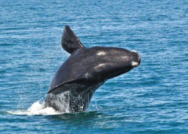Spot walvissen van dichtbij