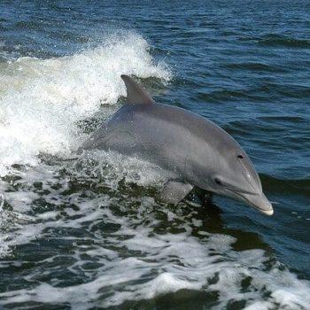Race op zee met de dolfijnen