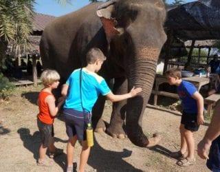 ontmoeting met de olifanten