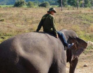 op een olifant zitten