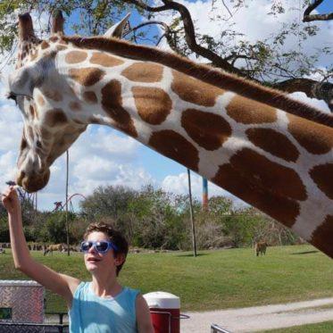 Ga op safari en krijg kriebels op de rollercoasters