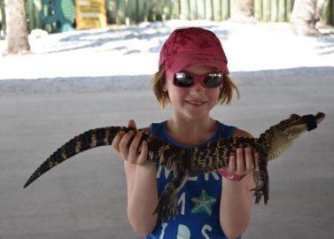 Krokodillen in de Everglades