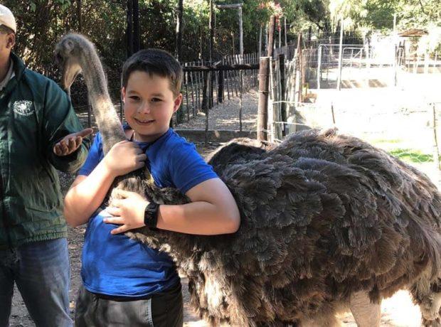 struisvogelboerderij: knuffelen met een struisvogel
