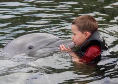 Zwemmen met de dolfijnen