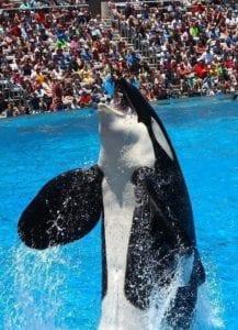 Seaworld: orka show