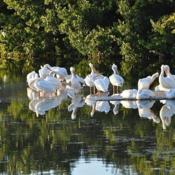 Sanibel - vogels