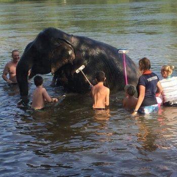 kinderen wassen de olifanten