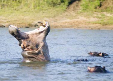 Varen tussen de nijlpaarden en krokodillen