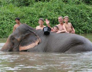 olifanten wassen met kinderen