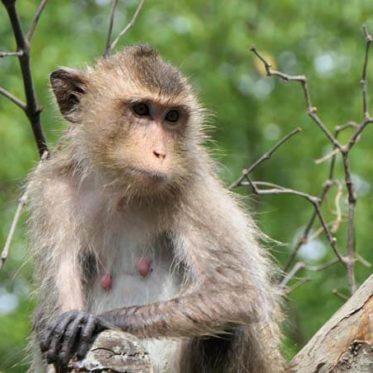 Thaise kookles en op bezoek bij de aapjes