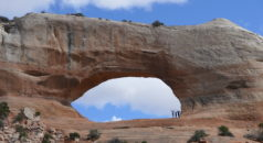 Arches in Arches National Park