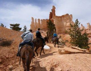 Trotseer de Bryce Canyon als een echte cowboy