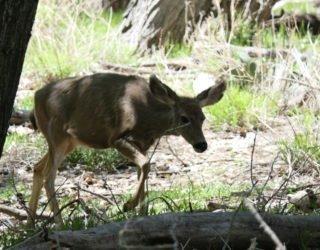 Zion National park dieren
