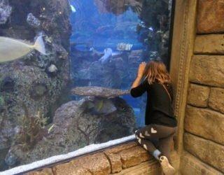 aquarium in Las Vegas
