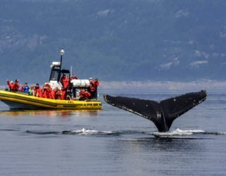 Op walvissencruise in Tadoussac