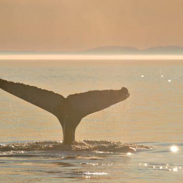 walvissen in Canada