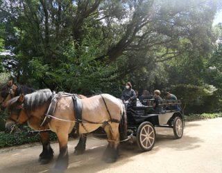 Met paard en kar door het sprookjespaleis