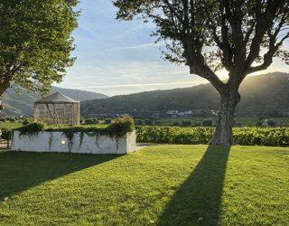 Prachtig zicht over de wijnranken