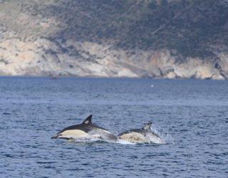 Dolfijnen in het wild