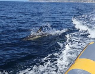 Dolfijnen spotten aan de Costa Lisboa