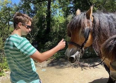 Finn bij paard en kar