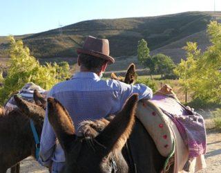 Met de ezels door de natuur