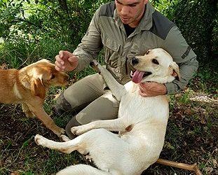 truffels zoeken met honden
